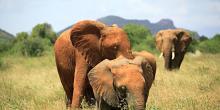 Kenya - Safari básico