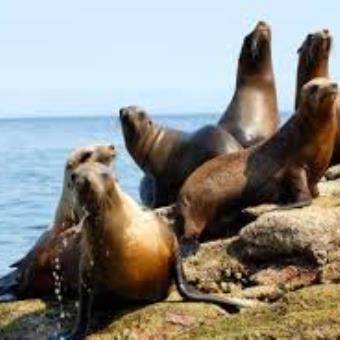 Trekking Dos Islas:  Isla Gorriti e Isla de Lobos - Turismo Nacional