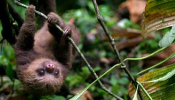 Costa Rica - Adrenalina Pura