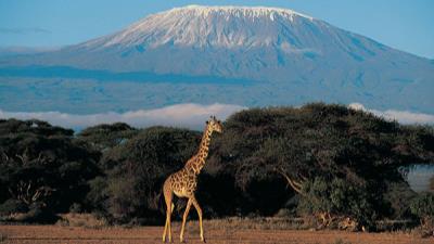 Safari Kenia y Tanzania - Surland