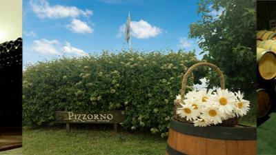 Bodega Pizzorno - Tour con degustación - Turismo Nacional