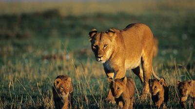 Kenia Esencial- Surland