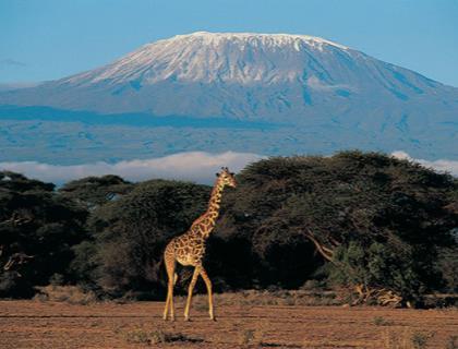 Kenya Y Tanzania - Safari combinado