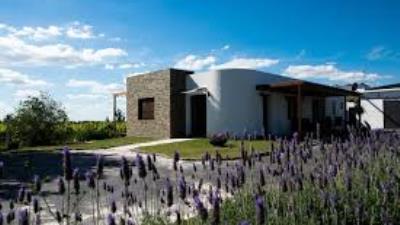 Bodega Pizzorno Lodge & Wine con almuerzo y degustación - Turismo Nacional